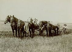 Five horse team plowing, Wahpeton, ND This image is from Set Pioneer Farms. Pioneer Farms, Draft Horses, Horse Farms, North Dakota, Historical Society, Farm Life, Country Life, Farming, New England