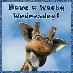 Funny Giraffe Pictures wallpapers Wallpapers) – Wallpapers For Desktop Wednesday Hump Day, Wednesday Greetings, Happy Wednesday Quotes, Wednesday Humor, Wacky Wednesday, Wonderful Wednesday, Wednesday Addams, Funny Giraffe Pictures, Funny Pictures