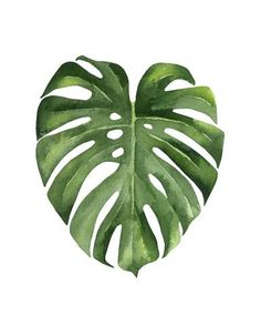 Tropical leaf by Ann Solo - Watercolour illustration on white. Leaf Drawing, Plant Drawing, Watercolor Plants, Watercolor Leaves, Watercolor Paintings Nature, Watercolours, Plant Painting, Plant Art, Tropical Art