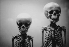 Black and White Tumblr Photography   black and white, photography, skeleton, skull - image #325189 on Favim ...