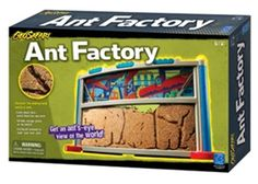 Ant Factory Ontario Birds, Foot Pads, Spring Nature, Ants, Habitats, Ant