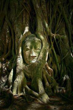 Photo: Buddha at Water Mahathat, Aguttaya, Thailand