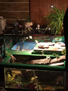 This is my turtle habitat that I made for my eared sliders. It is x and includes a 40 gallon tank. Aquatic Turtle Habitat, Aquatic Turtle Tank, Turtle Aquarium, Aquatic Turtles, Turtle Pond, Turtle Tanks, Red Eared Slider Tank, Red Eared Slider Turtle, Turtle Care