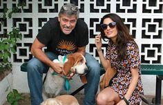 George Clooney & his basset-hound Millie.