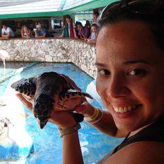 Bom dia viajantes que amam tartarugas marinhas! Sea aquarium em Curaçao. Viagens para recordar.  #mar #curacao #caribe #sea #aquario #aquarium #tartarugamarinha #turtle #antilhasholandesas #viagem #turismo #férias #fotododia #minhavida #vlog #mylife #youtubechannel #trip #photooftheday #fun #travelling #tourism #tourist #travel #myworld