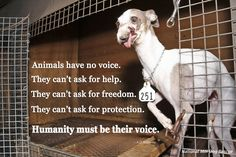 Animals have no voice. We must be their voice. #NMDR #rescue