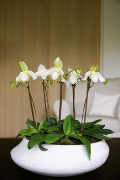 Schaal met witte orchideeën op tafel. Deze orchidee staat ook wel bekend als Venusschoentje. Zet er een aantal bij elkaar in een mooie bij je interieur passende schaal en je kamer vrolijkt meteen op. Bloemen Bureau Holland