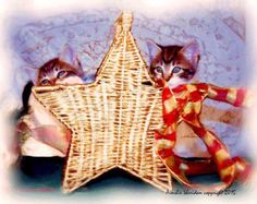 STAR KITTENS This is a work of digital art and uses Painter and Photoshop features to give these kittens the appearance of an oil. - Edit Listing - Etsy