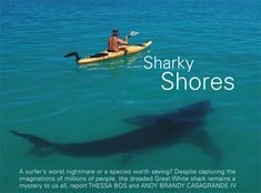 great white sharks - Google Search