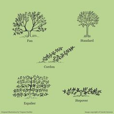 This image of trained fruit tree shapes is an original digital drawing by Virginie Hartley for Carrob Growers.  Reproduction of this image is not permitted without written permission from Caroline and Robert Boyle