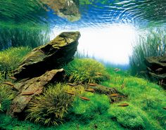 Takashi Amano-beautiful underwater worlds