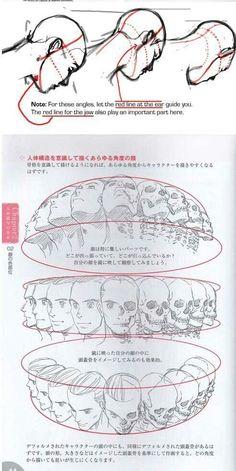 study of multiple angles of head/ skull