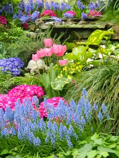 Pale blue grape hyacinth Muscari armeniacum Florist's cineraria Allan Gardens Conservatory Spring Flower Show 2014 garden muses: not another Toronto gardening blog