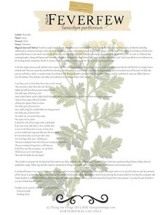 Herbarium: Magical and Medicinal Uses of Feverfew Wiccan Witch, Magick, Witchcraft, Magic Herbs, Herbal Magic, Herbs For Protection, Arthritis, Witch Herbs, Healing Herbs
