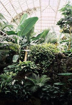 Botanical Garden - Tropical Plants • DESIGN. / VISUAL.