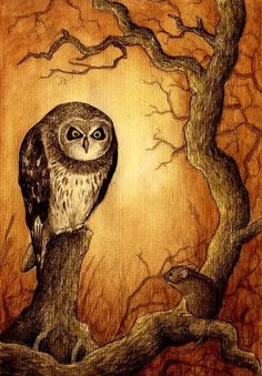 hunter of the swamp by moussee.deviantart.com owl painting