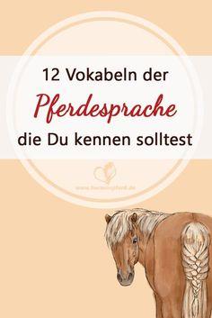 12 Vokabeln der Pferdesprache, die Du kennen solltest!