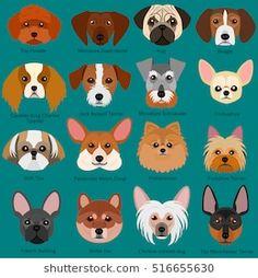 ベクター: small dog faces set with breeds name点 Small Fluffy Dog Breeds, Big Fluffy Dogs, Small Dogs, Cartoon Drawings Of Animals, Cartoon Fish, Cartoon Dog, Top Dog Names, Dog Face Paints, Best Apartment Dogs