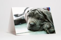 Dog at Rest, by Jacque Pollitt, light box photo