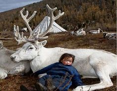 baby with white caribou