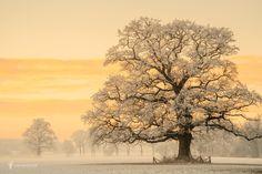 "Winter Light - Best Seen on Black, hit the M <a href=""http://larsvandegoor.com/"">| WEBSITE |</a><a href=""https://www.instagram.com/larsvandegoor/""> INSTAGRAM |</a>"