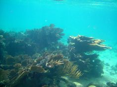 The Great Barrier Reef might be the largest Reef in the world, but this is the second largest and it is much more accessible and less deadly