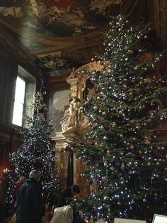 Christmas trees at Chatsworth house, Derbyshire, UK