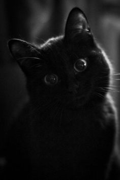 """""""I wish I could write as mysterious as a cat."""" --Edgar Allan Poe"""
