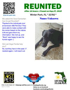 Helping Lost Pets   Dog - Great Dane - Reunited