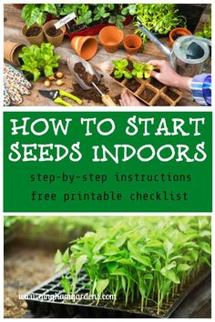 Container Gardening How to Start Seeds Indoors - It may not be spring yet, but gardeners can get a jump on spring by seed starting indoors. Come and learn how with a list of supplies and step-by-step instructions. Greenhouse Gardening, Hydroponic Gardening, Hydroponics, Container Gardening, Organic Gardening, Indoor Gardening, Outdoor Gardens, Indoor Greenhouse, Greenhouse Ideas
