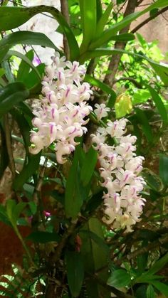 Orquídeas                                                                                                                                                      Más
