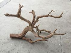 PW01 Manzanita branch wood -- driftwood plant shrimp moss discus Anubias Crypt #ManzanitaBranchWood