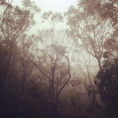 I feel so blessed having spent ten days practicing Vipassana in the Blue Mountains