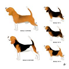 Pictures of Animals Other art or illustration contest design Beagle Art, Scooby Doo, Animal Pictures, Illustrators, Design Art, Infographic, Illustration Art, Template, Animals