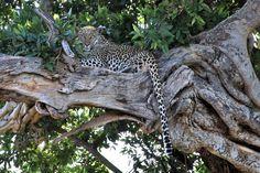 Southafrica  Madikwe Safari South Africa, Safari, Places, Animals, Animales, Animaux, Animal Memes, Animal, Animais