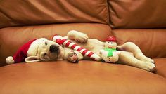 Sleeping christmas puppy - Wuvely