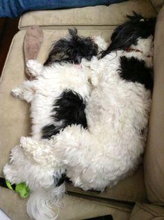 Sisterly Shih Tzu Love <3 Shitzu Puppies, Puppys, Cute Puppies, Dogs And Puppies, Shih Tzu Dog, Shih Tzus, Amazing Dogs, My Animal, Dog Grooming