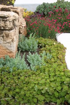 What are the plants used in this photo? I am most interested in the two types at the front of the photo. - Houzz sedum sprium