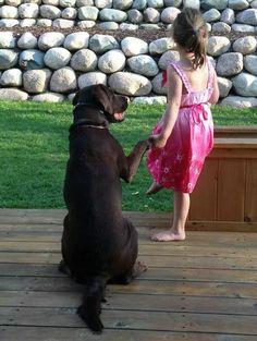 amamos-perros03