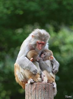 Mother holding her twins, so cute! I wanna hug them all. >_<