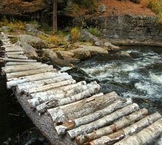 #mountains #Autumn #water #forest  #photograph #photoshoot_idea