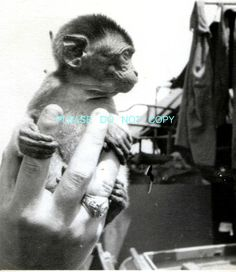 "WW2 Photo - PT Boat 187 Mascot ""Eight Ball"" Monkey - Navy SHIP - South Pacific"