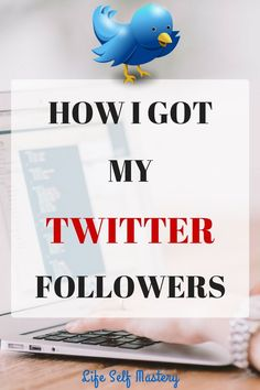 I got Twitter followers by selecting random & important people, how did you get yours? I absolutely love the blue bird, after all it is Twitter's mascot, right!