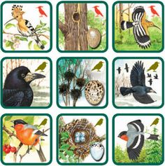 3 File Folder Activities, Finger Plays, Forest Theme, Bird Theme, Step Kids, Early Childhood Education, Forest Animals, Diy Toys, Preschool Activities