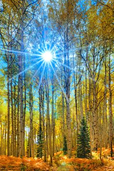 Autumn Sun Star - Crested Butte, Colorado, United States.