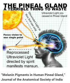 """Melanin Pigments in Human Pineal Gland,"" Journal of the Anatomical Society of India Masson-Fontana staining confirmed the presence of melanin pigments in the human adult pineal gland. Spiritual Enlightenment, Spiritual Awakening, Master Of The Universe, Cho Ku Rei, Chakra Meditation, Meditation Music, Mindfulness Meditation, Spirit Science, Black History Facts"
