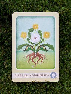 Dandelion - The Herbal Healing Deck - Illustration by Ashley Verkamp Taraxacum, Herbal Plants, Oracle Cards, Herbal Medicine, Herbal Remedies, Earthy, Tarot, Herbalism, Dandelion
