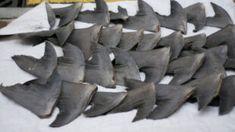 Silky Shark, Species Of Sharks, Environmental Issues, Animal Welfare, Natural World, Wildlife