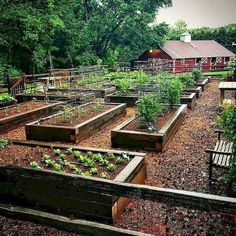 If space is an issue the answer is to use garden boxes. In this article we will show you how all about making raised garden boxes the easy way. We all want to make our gardens look beautiful and more appealing. Raised Vegetable Gardens, Vegetable Garden For Beginners, Vegetable Garden Design, Raised Garden Beds, Raised Beds, Vegetable Gardening, Organic Gardening, Gardening Tips, Veg Garden