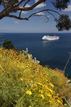 Catalina Island in CA- still to explore, the kelp forests and to maybe one day do their trail marathon